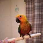 Jenday Conure And Cage
