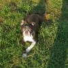Pets  - Beautiful Girl Looking For Her Forever Home