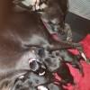 Pets  - Kc Registered Puppys