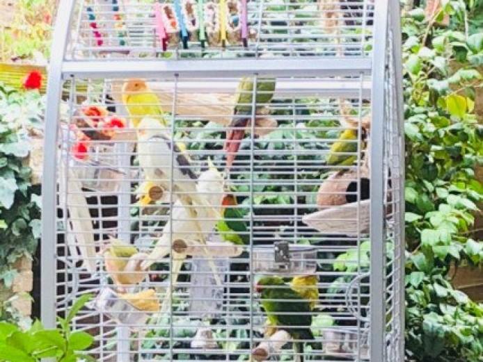 Birds Plus Set Up For Quick Sale