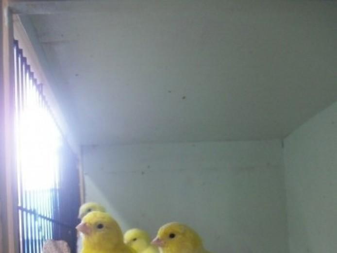 Border Canaries