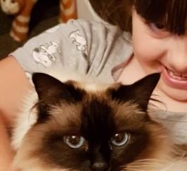 Pedigree Birman Cat