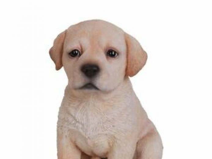 Wanted Yellow Labrador Mele Puppy