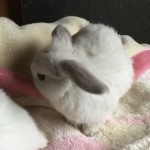Loving Rabbits For Sale