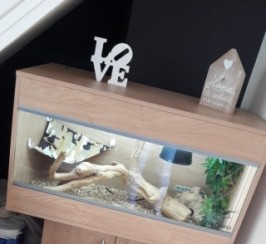 Bearded Dragon And 3ft Vivarium & Stand