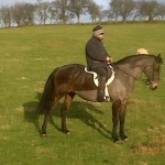 Family Horse Superb Allrounder