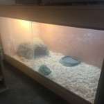 Female Leopard Tortoise And Setup For Sale