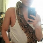 Large Female Boa