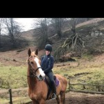 The Ultimate All-round Gelding