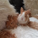 Lion Rex Babies Stunning Only One Left!