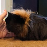 Lovely Well Handled Long And Short Hair Piggies