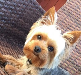 Pets  - Mr Simba is looking for a girlfriend