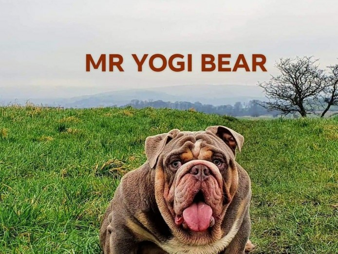 MR YOGI BEAR AVAILABLE FOR STUD