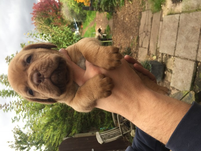 Outstanding Pups For sale