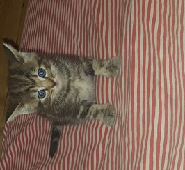 2 beautiful playful kittens looking for forever homes