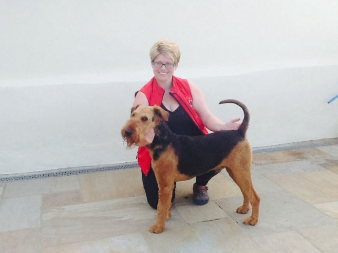 Kc Registered Airedale Terrier