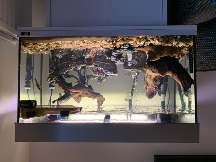 2 Musk turtles and tank .