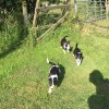 Pets for Sale - Beautiful border collie puppies for sale