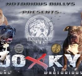 Pets  - ABKC REG XL American Bully Pups