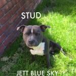 Gorgeous Jet Blue Sky for Stud