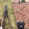 Pets  - Labrador retrievers