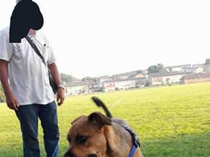 Rottweiler x Bull Mastiff