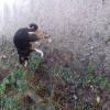 Pets  - Border collie