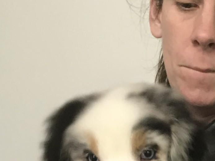 Stunning Australian Shepherd Puppies