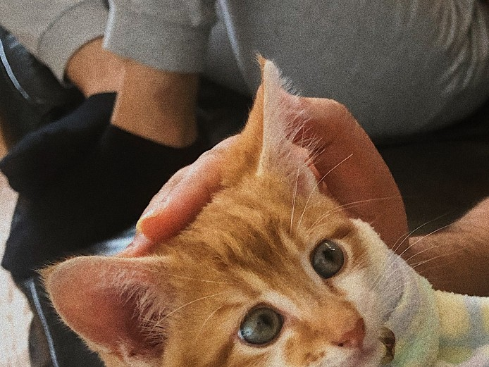 White and ginger boy