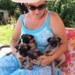 Beautiful Litter Of Pedigree Pug Puppies