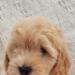 Pet Image