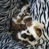 Pets  - Very chunky K.C registered st Bernard puppies