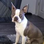 (STUD) Lilac Boston