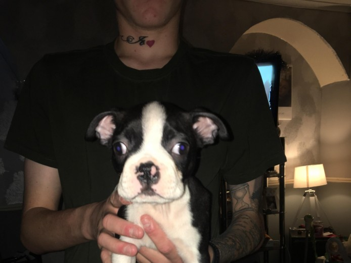 4 BOSTON TERRIER PUPPIES FOR SALE!!