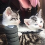 4 Beautiful kittens needing forever homes TODAY