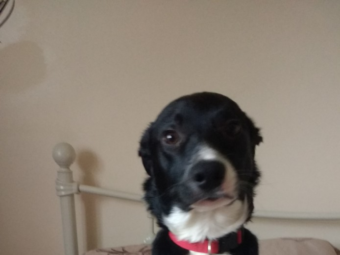 6 Month Old Border Collie