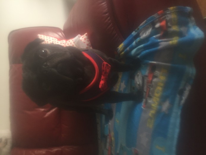 Black pug for stud