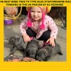 Pets  - Best Bred Blue Staff Puppies Anywhere In The UK