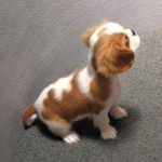 Cavalier King Charles Spaniel, KC Registered