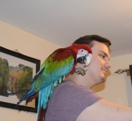 Parrot for sale with Package not for novice bird keeper