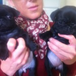 Fawn and Black Pug Puppies for Sale