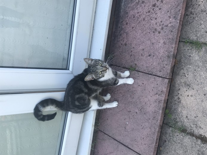 One year old female cat for rehoming
