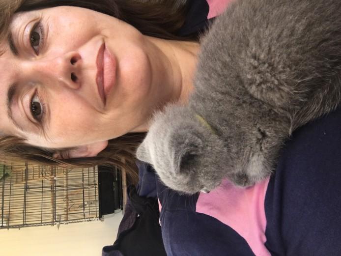 Beautiful PEDIGREE GCCF registered British Shorthair kittens