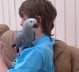 Hand Reared African Grey Parrot & Cage For Sale