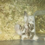 5 species of mice for homes