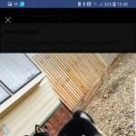 Husky 10 Month Male