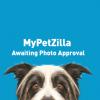 Pets  - Beautiful pug puppies